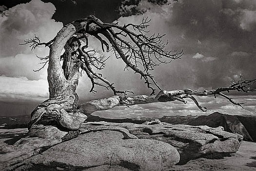 Mike Penney - Sentinel Dome Tree Yosemite