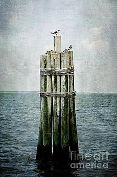 Sentinel by Joan McCool