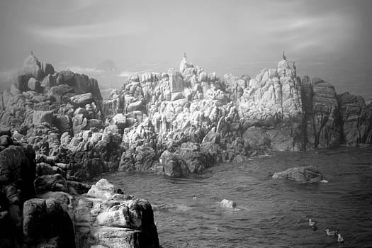 Joyce Dickens - Sentinels In The Fog B And W