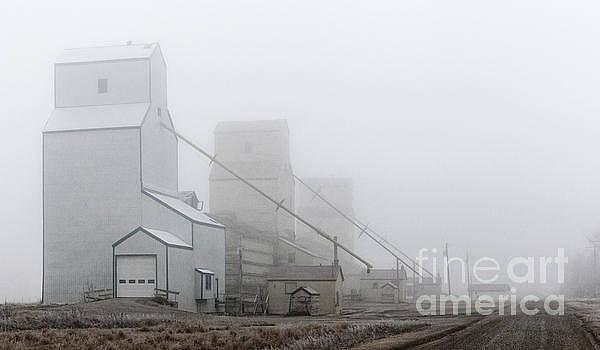 Sentinels in the Fog by Brad Allen Fine Art