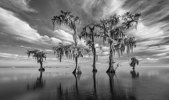 Sentinels of Lake Maurepas by Andy Crawford