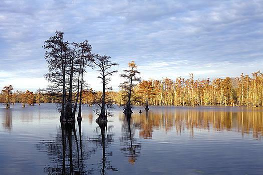 Sentinels of the Lake by Jane Eleanor Nicholas