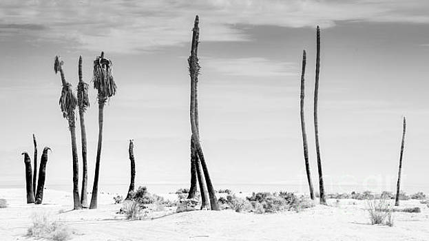 Sentinels of the Salton Sea by Jim DeLillo