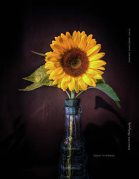 Sentinnel Sunflower by Dave McGregor