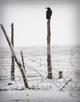 Sentry Looking Left by Nadine Berg