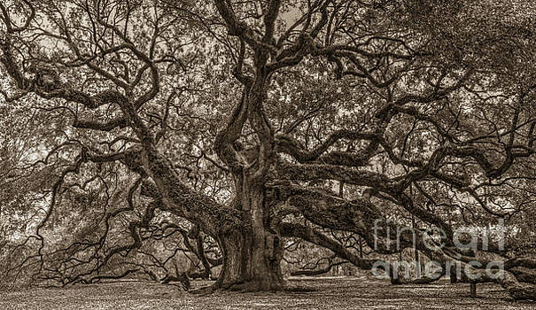 Dale Powell - Sepia Angel Oak Mod