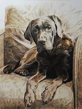 Sepia chocolate Labrador by Julian Wheat