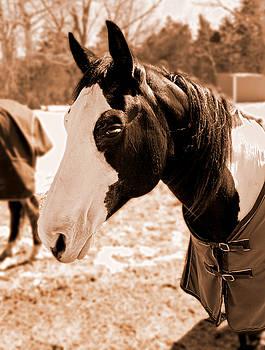 Tina McGinley - Sepia Horse