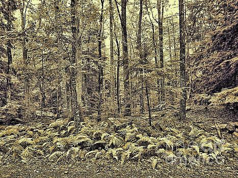 Jeff Breiman - Sepia Landscape