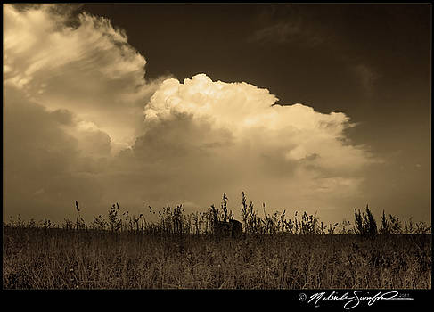Sepia LP Supercell by Melinda Swinford