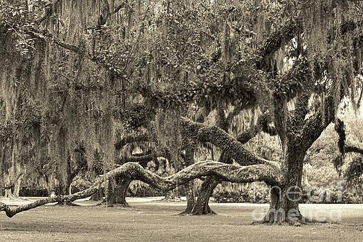 Chuck Kuhn - Sepia Moss Trees