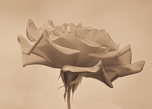 Sepia Rose by Russ Mullen