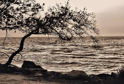 Sepia Sunset by Rosalie Scanlon