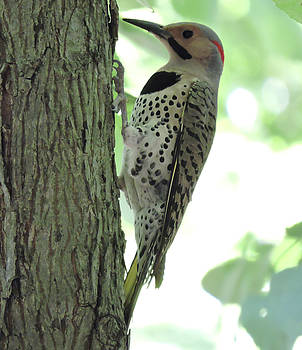 September Flicker by Peg Toliver