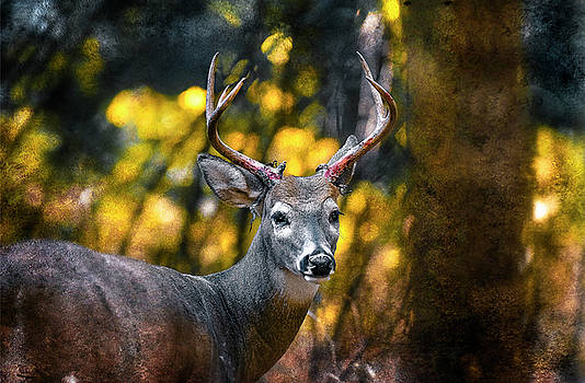 2016 Art Series #5 by Garett Gabriel