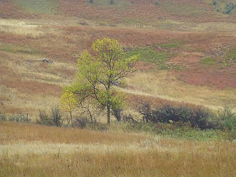 September Prairie Treasure by Cris Fulton