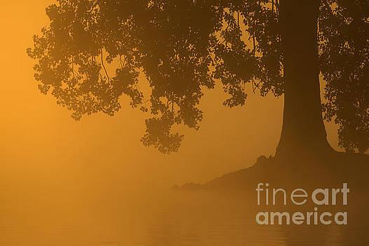 Septembermorning by Corne Van Oosterhout