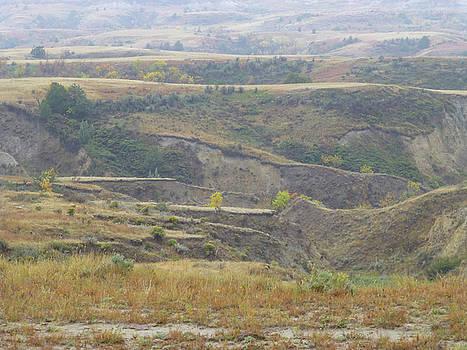 September's Golden Grasslands by Cris Fulton