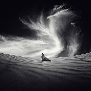 Sequia by Luis  Beltran