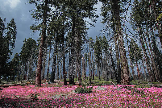 Sequoia National Forest by Chris Burke