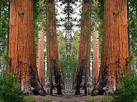 Sequoia National Park Mirror by Kyle Hanson