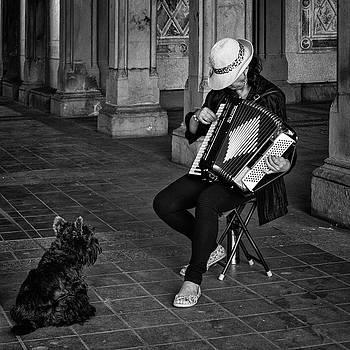 Serenade for a Dog by Cornelis Verwaal