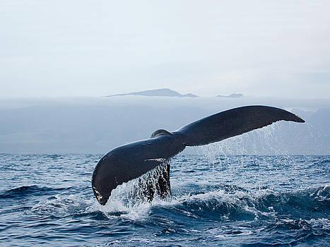 Serene Humpback Whale Fluke by Michael Sweet