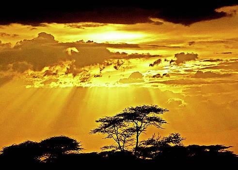 Dennis Cox WorldViews - Serengeti Sun Rays