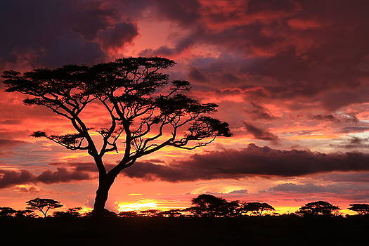 Serengeti Sunset by Ann Sullivan