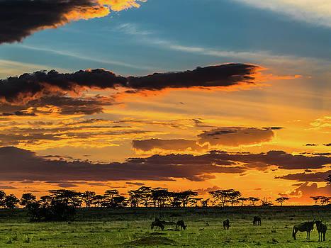 Serengeti Sunset by Robin Zygelman