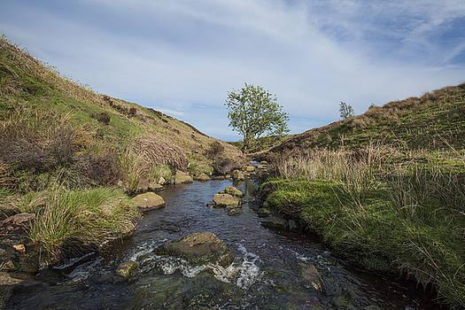 Stewart Scott - Serenity creek