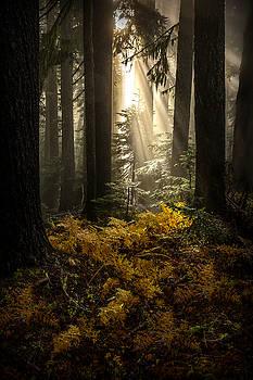Serenity by Ryan Smith