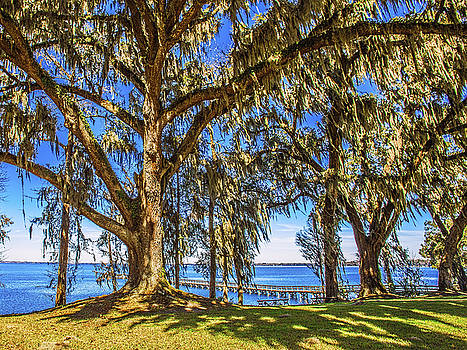 Paula Porterfield-Izzo - Serenity Tree