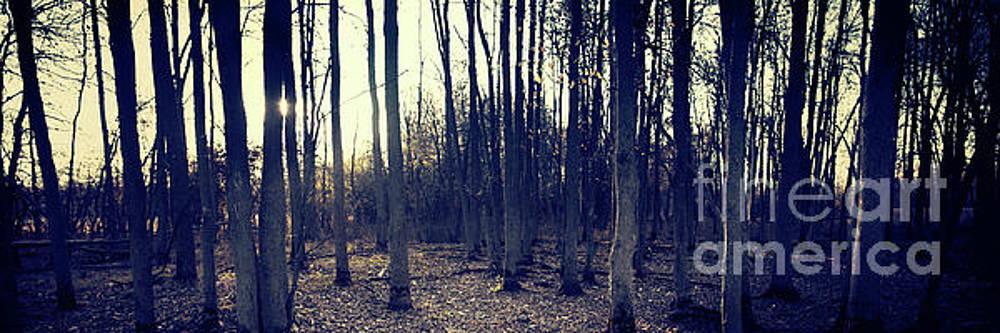 Series Silent Woods 1 by RicharD Murphy