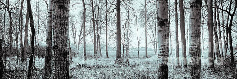 Series Silent Woods 2 by RicharD Murphy