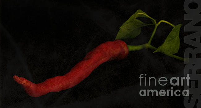 Serrano Pepper with a black background by Art Whitton