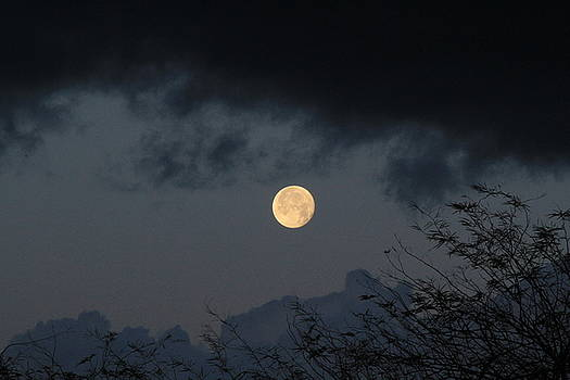 Setting Moon in Tucson by Judy C Moses