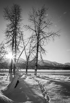 Setting Winter Sun by Michele Cornelius