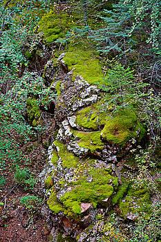 Robert Meyers-Lussier - Seven Falls Flora Study 10