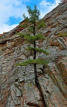 Robert Meyers-Lussier - Seven Falls Flora Study 8
