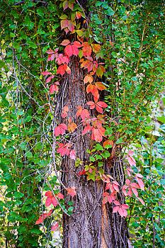 Robert Meyers-Lussier - Seven Falls Flora Study 9
