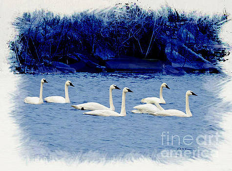 Seven Swans Swimming by Kathy M Krause