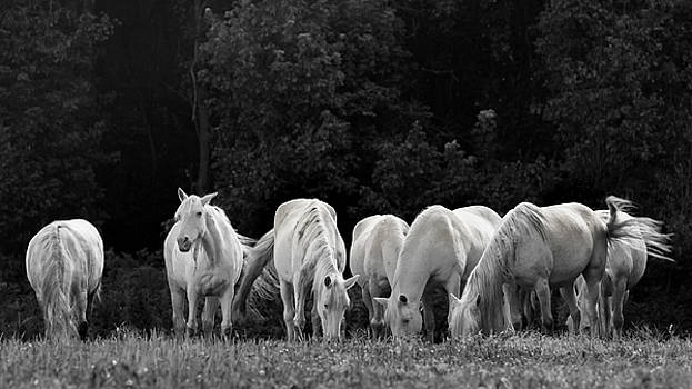 Seven White Ponies by Holly Ross