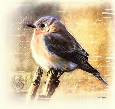 Shabby Chic Bluebird by Tina LeCour