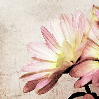 Shabby Pink Daisy Petals Dreamy Soft Romantic Floral by Melissa Bittinger