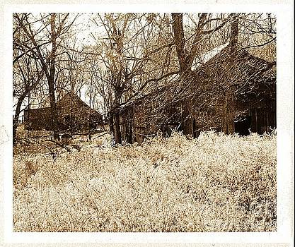 Shacks In The Woods by Kathleen Struckle