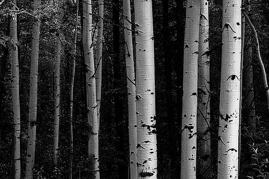 Shades Of A Forest by James BO Insogna