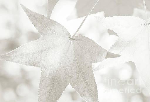 Shades of Autumn by Anita Oakley