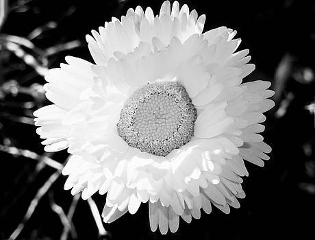 Robert Meyers-Lussier - Shades of Blanc