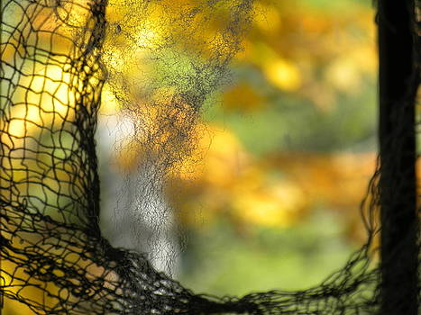 shades of October by Deb Ingram